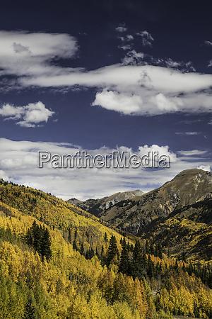 mountain vista covered in autumn aspen