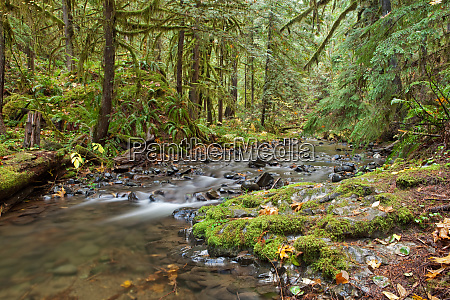 lush landscape in western oregon with