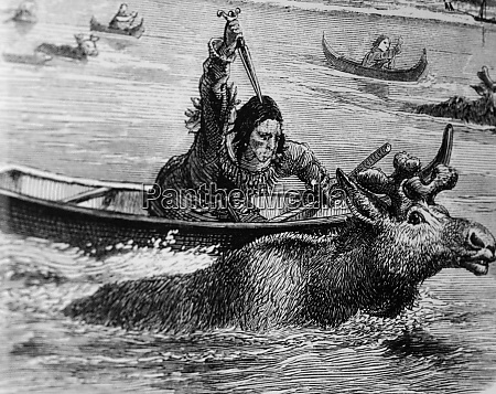 while moose crossed waters native tribes