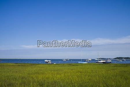 usa massachusetts cape cod eastham marsh