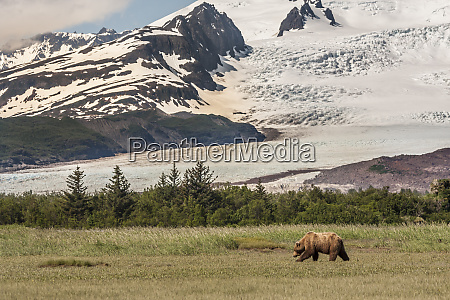 usa alaska katmai national park hallo