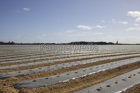 usa florida homestead agricultural covered rows