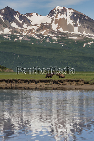 usa alaska katmai national park coastal