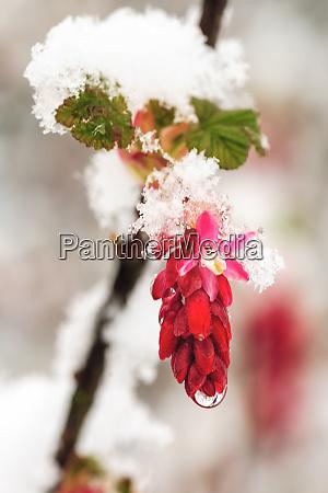 spring snowstorm portland oregon
