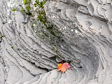 usa michigan upper peninsula autumn leaf