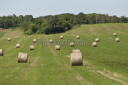 minnesota dakota county rolled bales of