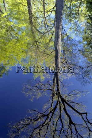 usa pennsylvania tree reflected in pond