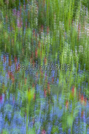 usa pennsylvania wayne chanticleer garden abstract