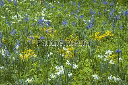 usa pennsylvania wayne chanticleer garden blooming