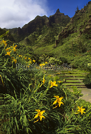 day lillies frame haena state park