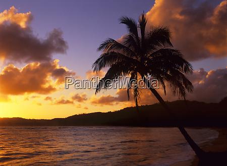 tropical sunrise on the garden isle