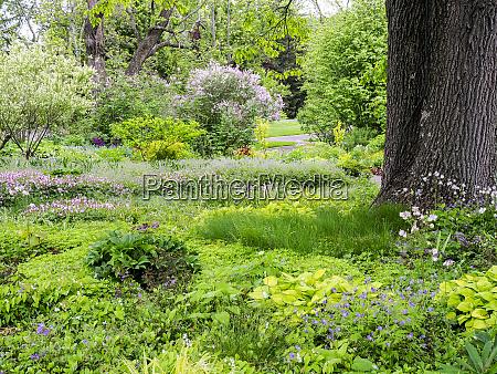 usa pennsylvania springtime with flowers and