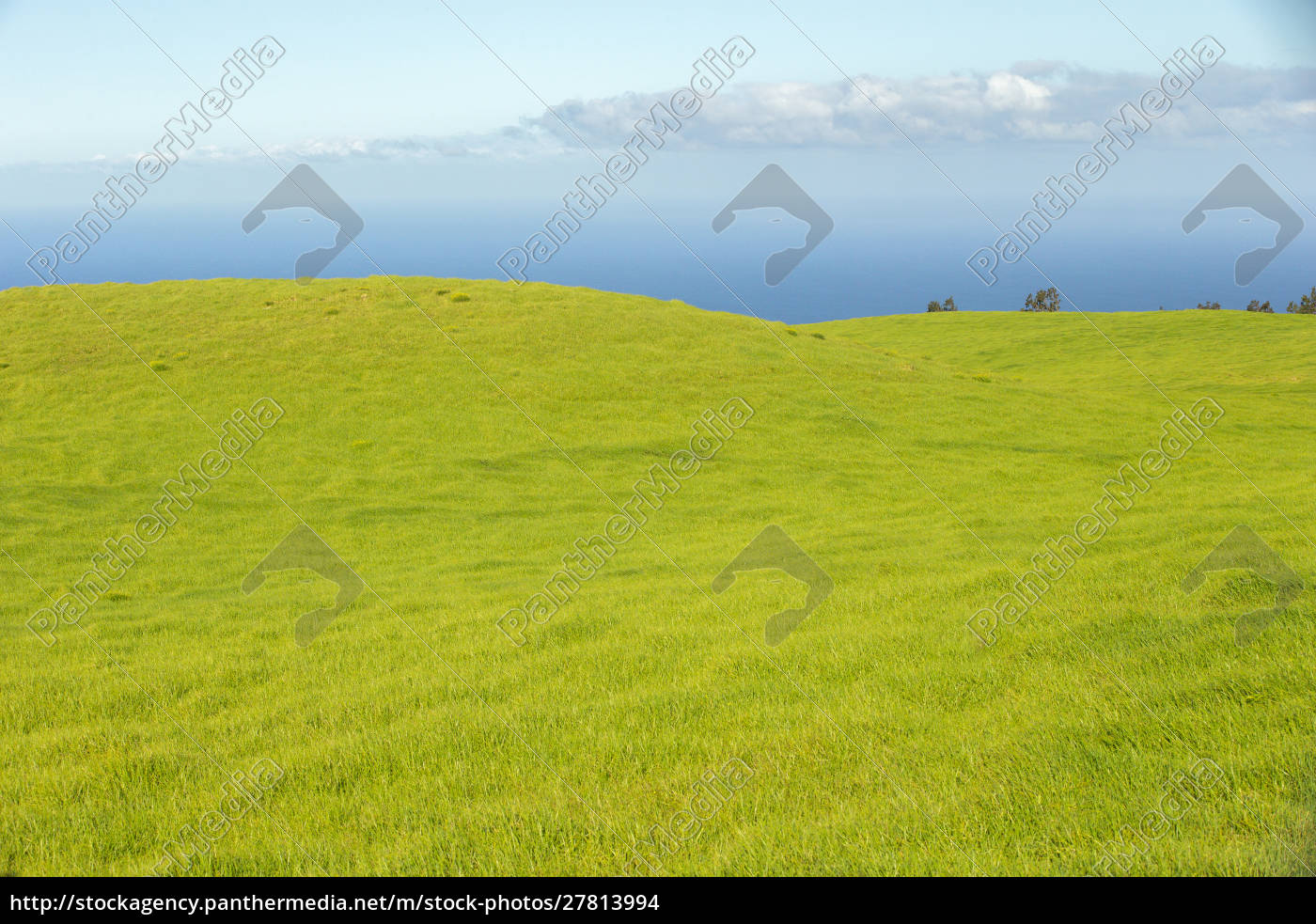 green, grasses, of, the, northern, kohala - 27813994