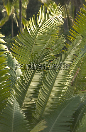 usa hawaii kauai tropical ferns at