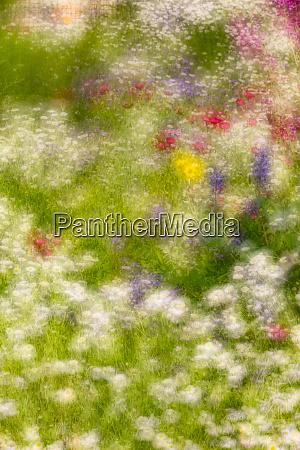 double exposure soft focus on flowers