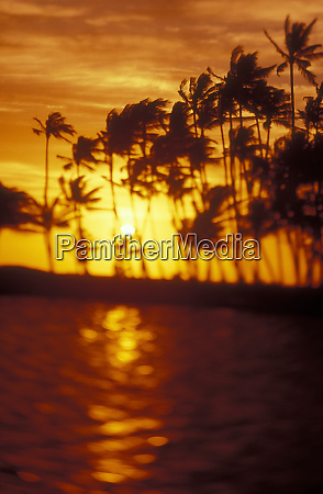 select focus coconut palms kohala coast