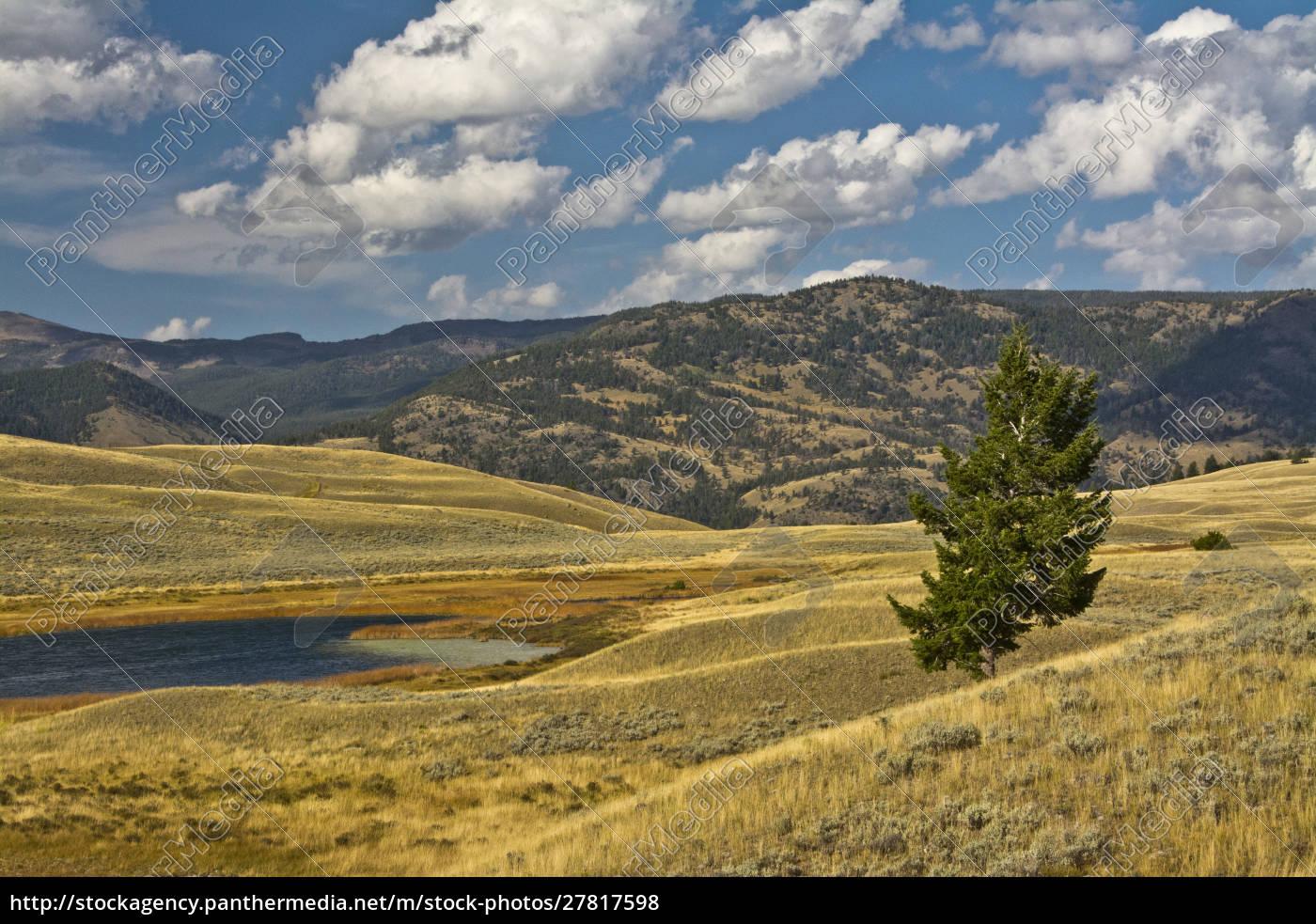 blacktail, pond, , blacktail, deer, plateau, , yellowstone - 27817598