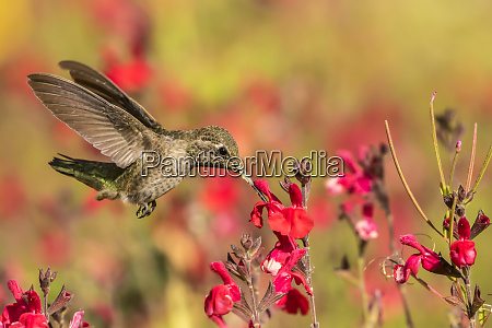 usa arizona desert botanic garden feeding