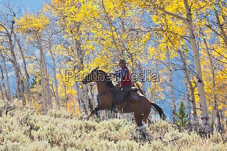 usa wyoming shell cowboy riding through