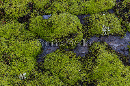 moss clings to rocks in the