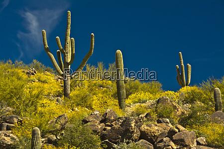 saguaro desert landscape tender hills park
