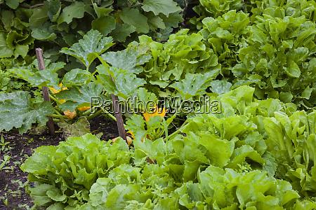 neighborhood vegetable garden