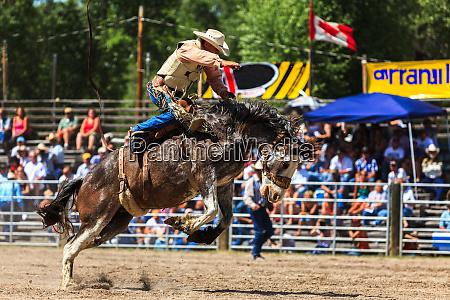 bronco rider in western rodeo augusta