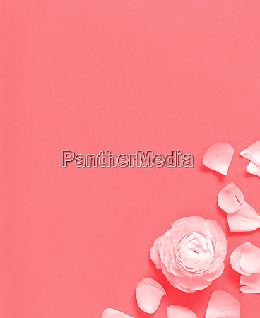 flower and petals on a pink