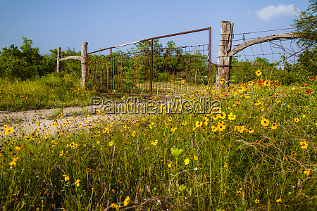 ranch gate and wildflowers near uvalde