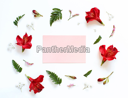 red and white flowers on a