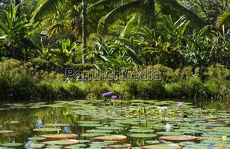 hilo hawaii big island panaewa rain