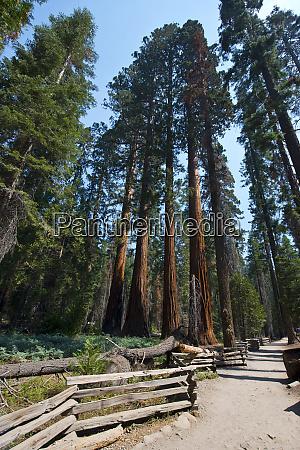 usa california sequoia kings canyon national