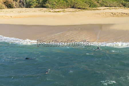 monk seal laau point molokai hawaii