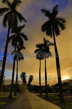 royal palm drive wahiawa oahu hawaii