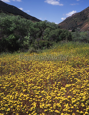 usa california mission trails regional park