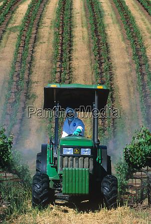 an agricultural worker sprays a vineyard