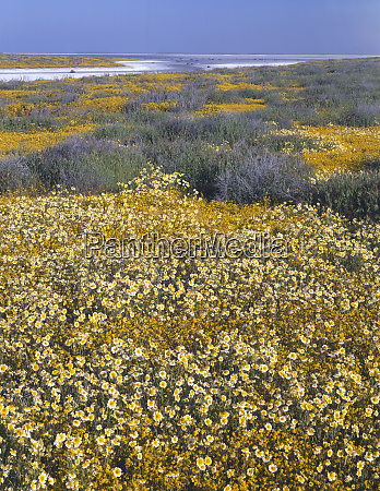 usa california carrizo plain national monument