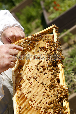 queens new york usa bee keeping