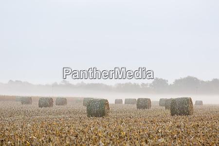 hay bales in field on foggy