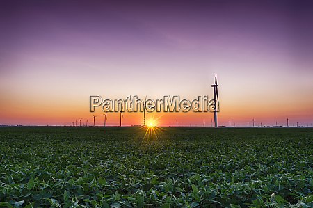usa indiana soybean field and wind