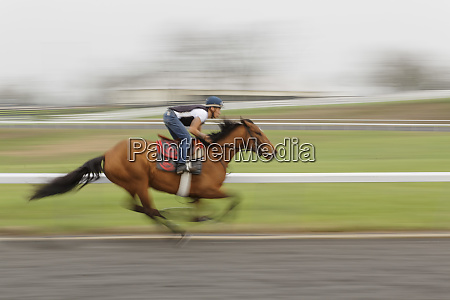 motion blur of horse working out