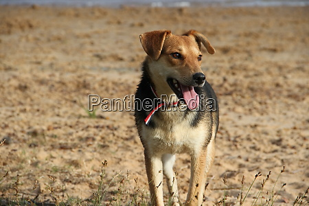 happy mongrel dog playing on the