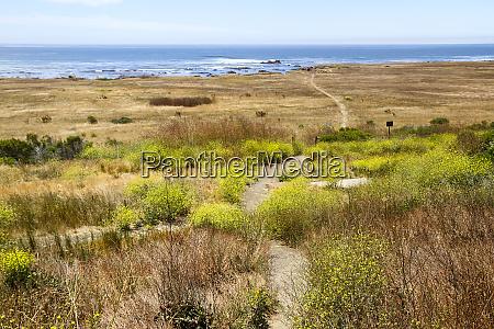 a narrow footpath towards the ocean