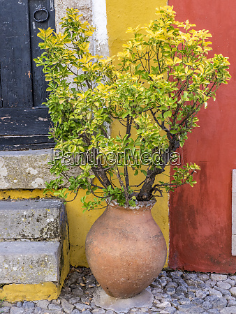 portugal obidos potted plant in front