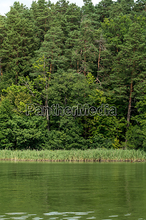 forest on a lake shore