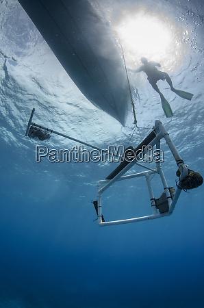 bruv baited remote underwater video monitoring