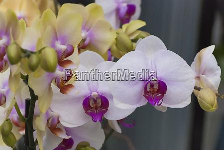 multicolor orchids