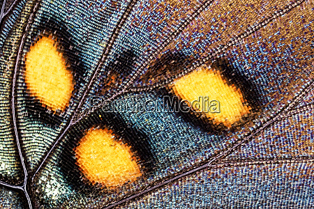 close up pattern wing scales of