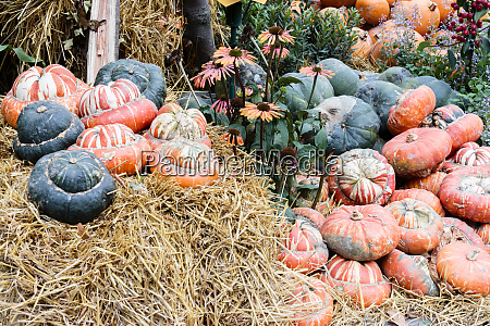 pumpkin decoration tivoli gardens halloween decorations