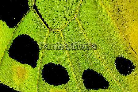 close up detail wing pattern of